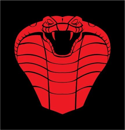 venomous snake: rojo negro cobra