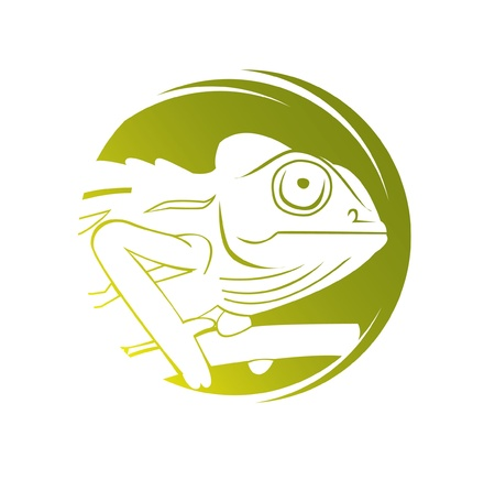 veiled: chameleon