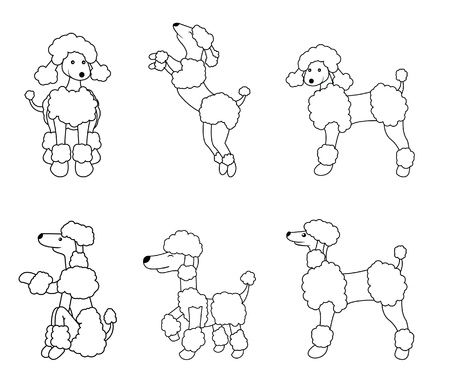 miniature poodle: poodle dog Illustration