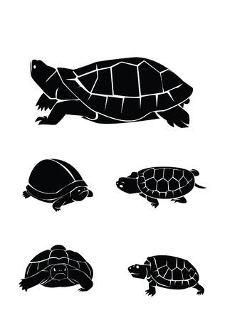 green turtle: tartaruga Collection Set