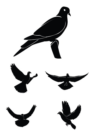 paloma caricatura: paloma Set Collection Vectores