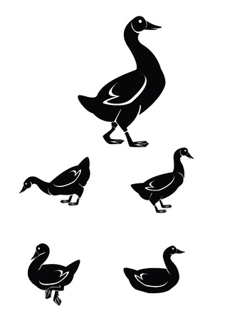 duck Collection Set Vector