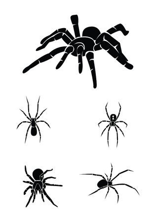 spider web background: spider Collection Set