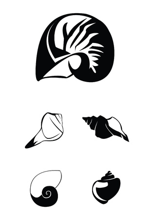 shell Collection Set Stock Vector - 17930030