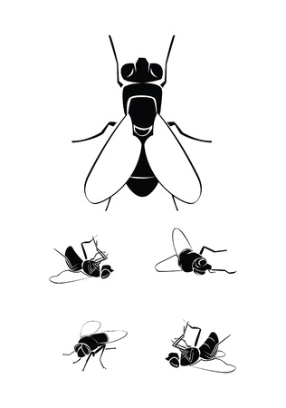 musca: fly Collection Set Illustration