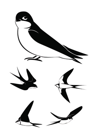 swallow Collection Set Stock Vector - 18010898