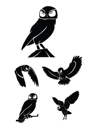 bird of prey: owl Collection Set
