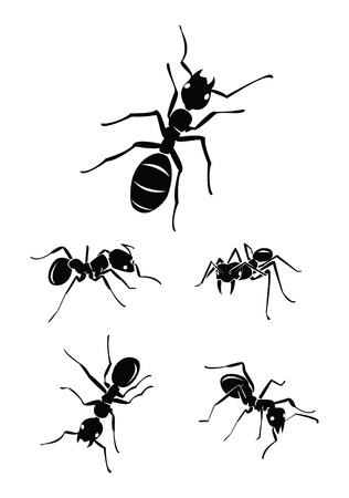 colony: ant Collection Set Illustration
