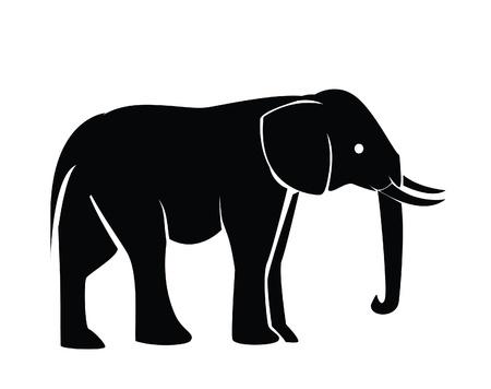 african grey: elephant