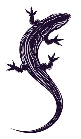 salamander: lizard Illustration