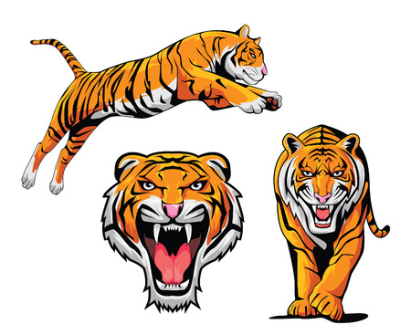 Tiger Illustration Set Vector