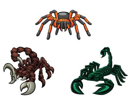 tarantula: Scorpion and Tarantula Illustration
