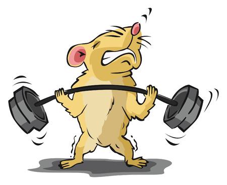 hamster: Hamster body building training Illustration