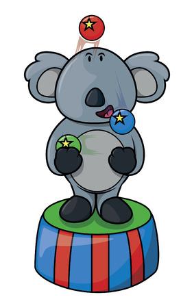 acrobat: Koala circus acrobat