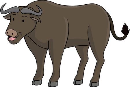 buffalo bison: Buffalo