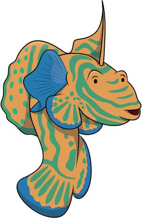 mandarin: Mandarin dragon fish