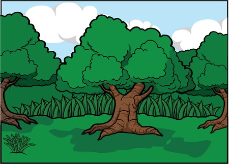 tropical tree: Forest scenery