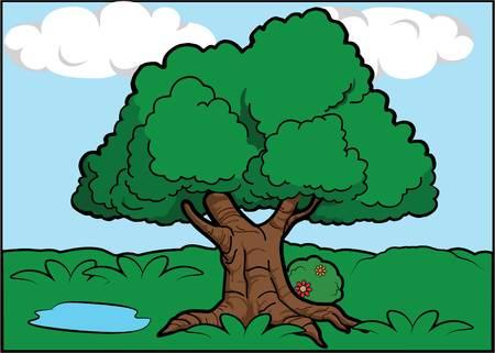 big scenery: Big tree scenery around forest