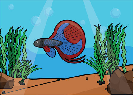 betta: Fight fish underwater scenery