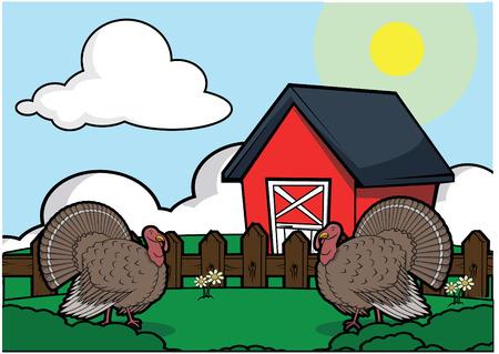 Turkey bird farm