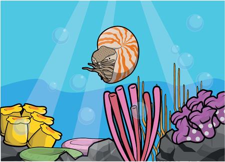 cephalopod: Nutilus underwater scenery