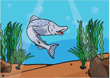 salmon fish: salmon fish underwater scene