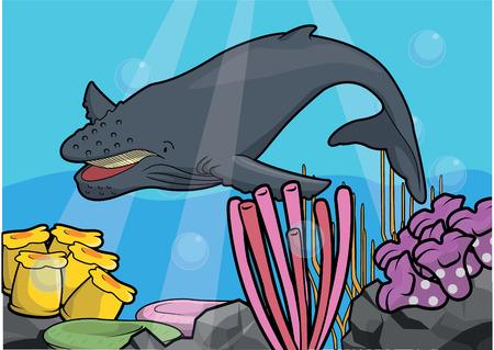 light maldives: Hunch back whale underwater scenery