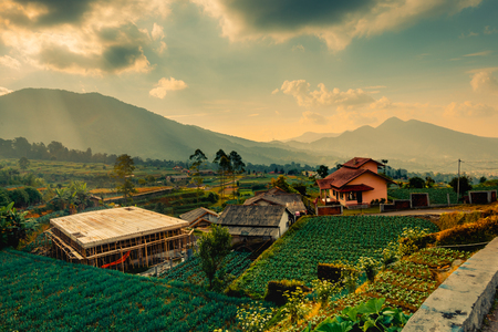 Scenery from countryside
