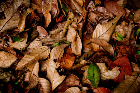 Leaves and twigs on ground in the forest for background
