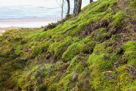 Trees near the sea were covered with plenty of green moss.