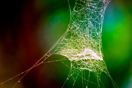 Close up fine art photo of white thin narrow spider web on dark green blur nature background with shallow depth of field. Cobweb elements, spooky, scary with halloween design. Copy Space for text.