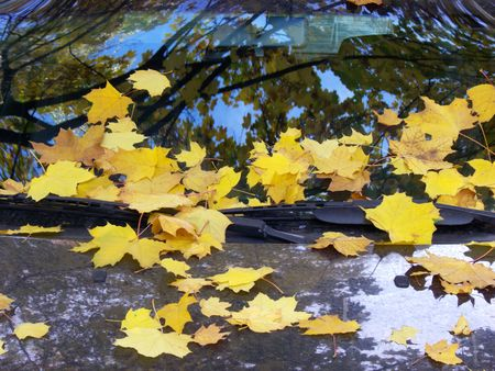 Leaves of a maple on glass and a cowl of the car.