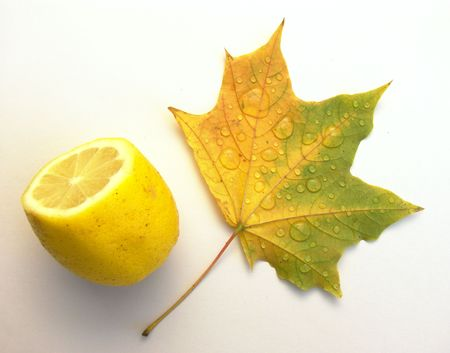Drops of water on a leaf of a maple and a lemon on a white background.