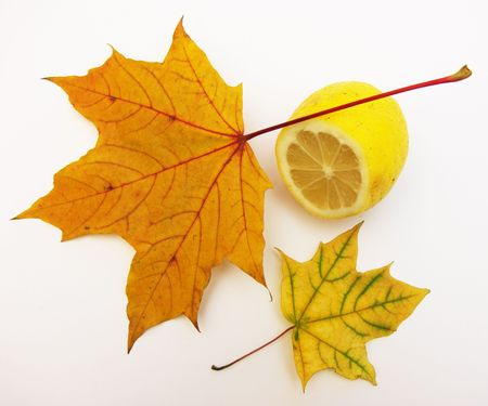 Two autumn maple leaves and one lemon on a white background. Stock Photo