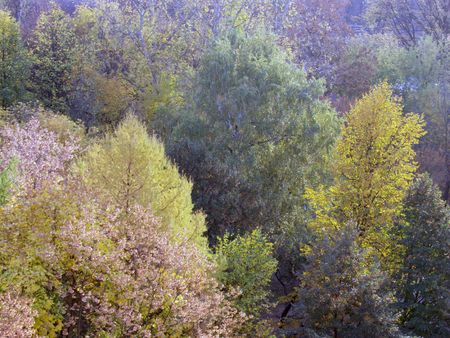 Kind from my window. Autumn morning a landscape.
