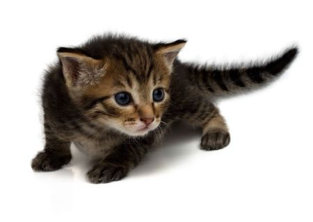 Little dear kitten on a white background. Stock Photo