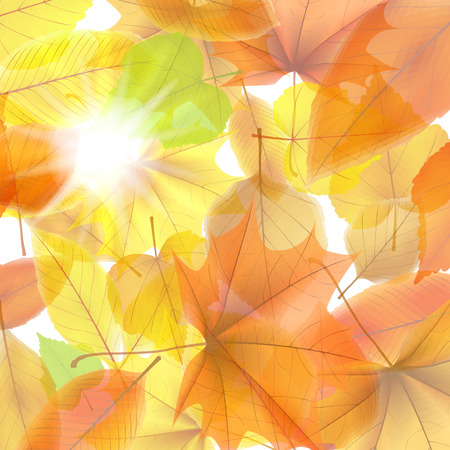 Autumn background with maple leaves  plus  Vector
