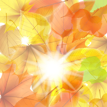 Autumn background with maple leaves  plus EPS10 Vector