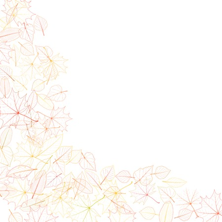 Autumn leaves on white background  plus  Vector