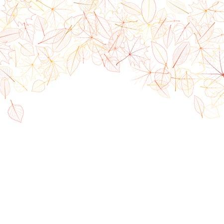 chokeberry: Autumn leaves on white background  plus