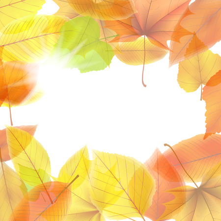 Autumn background with maple leaves  plus
