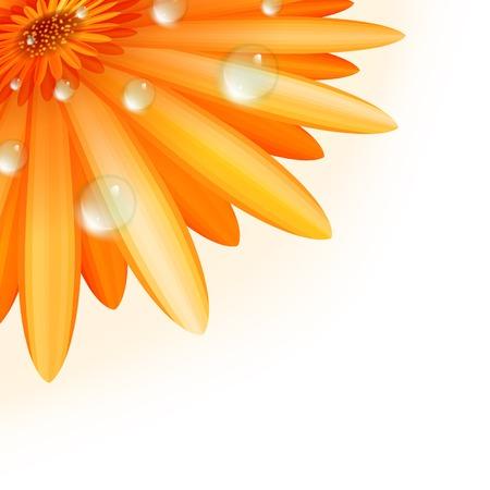 abloom: Gerber p�talos con gotas de agua m�s