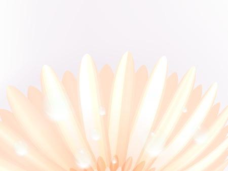 calendula: Water drops on elegant gerbera petals  plus