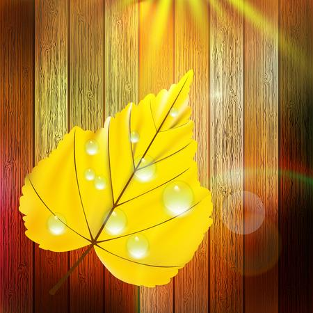 Autumn Leaf template  plus EPS10  Vector