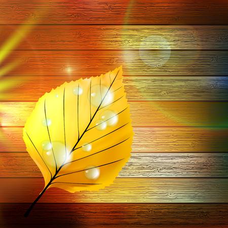 Autumn Leaf template  plus  Vector