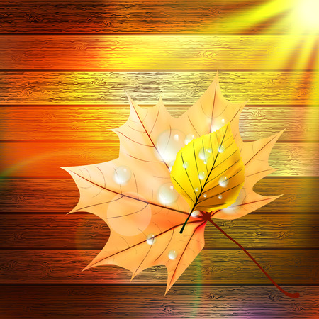 wet wood: Autumn Leaf template  plus EPS10  Illustration