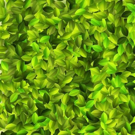 Groene bladeren patroon degign. EPS10