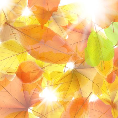 Herfst achtergrond met esdoorn bladeren. plus EPS10