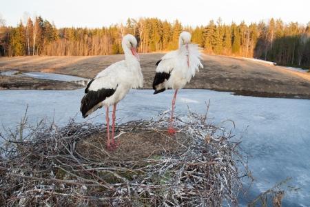 White stork family sleeping on nest Stock Photo - 17225847