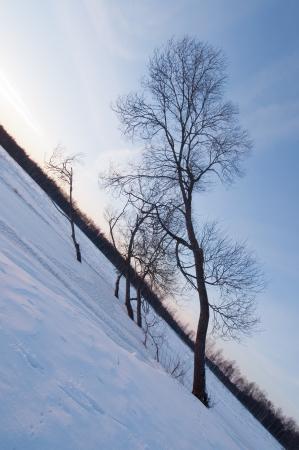 riverside trees: Skewed trees on riverside
